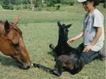 denise_foal
